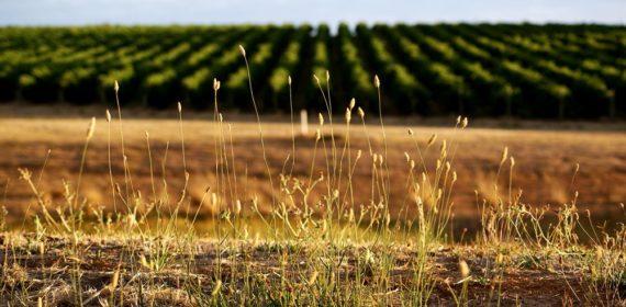 Vineyard-Web